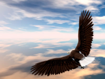 "Eagle Flying. ""You never know when one act, or one word of encouragement can"